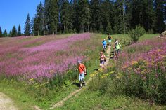 Wandern in einer Grupper - Wagrain Kleinarl - Sommerurlaub