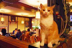 従業員は猫さん! 愛想良しの猫さんたちが接客してくれる居酒屋「赤茄子」で1杯飲みながら猫さんと遊んできた