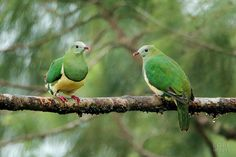 Pigeon, Beautiful Birds, Animaux