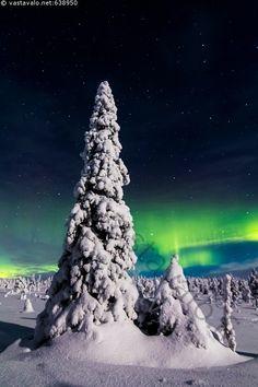 Tykkyä ja revontulia - revontulet revontuli aurinkotuuli talvi talviyö yö yötaivas tähtitaivas tähdet tähti lumi luminen tykky tykkylumi kinokset nietokset kinos hanki kuusi Picea abies talvinen pakkanen kylmä maisema talvimaisema lumihanki luonto pakkasyö lumimaisema vihreä vihreät puu lumiset puut Aurora borealis joulukuu öinen Riisitunturi Riisitunturin kansallispuisto Lappi