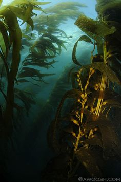 Kelp Forest 4 - scary