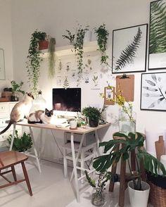 Зеленый мини-сад в доме.