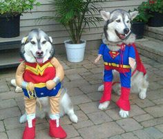 Omg I need this for my dog