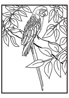 Ccoloriage oiseaux a imprimer gratuit drawing pinterest - Coloriage toucan a imprimer ...