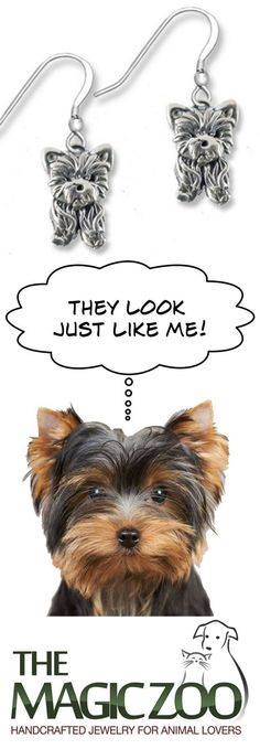 5 great ways to express your Yorkie love! http://www.themagiczoo.com/5-great-ways-to-express-yorkie-love