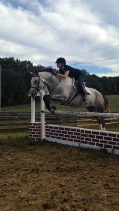 Sadie - Grey Welsh Pony Mare in Richmond, Virginia 23005 Welsh Pony, Richmond Virginia, Sadie, Horses, Grey, Animals, Gray, Animales, Animaux