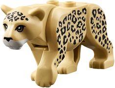 Leopard, 2017