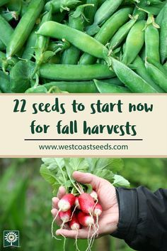 our list of seeds to start in August for fall and winter harvests. These fast-growing seeds are cold hardy, and will thrive in your organic garden in late August and September. Important for all homesteaders who want to garden year round! Winter Vegetables, Organic Vegetables, Growing Vegetables, Fall Planting Vegetables, Growing Tomatoes, Design Jardin, Organic Gardening Tips, Vegetable Gardening, Gardens