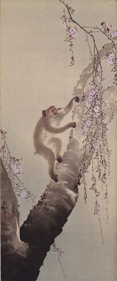 Ohara Koson, Monkey and Cherry Japanese Painting, Chinese Painting, Chinese Art, Chinese Brush, Japanese Prints, Japanese Art, Japanese Monkey, Ohara Koson, Monkey Tattoos
