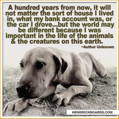 Animal Rescue Dogs Quotes Animal Lovers Inspiration Life Pets