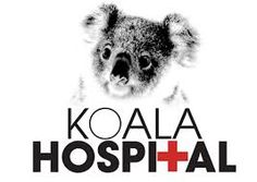 Image result for small pictures of koalas