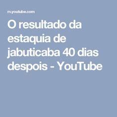 O resultado da estaquia de jabuticaba 40 dias despois - YouTube