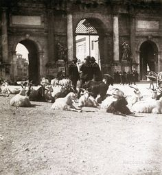 Piazzale Flaminio.Greggedi capre