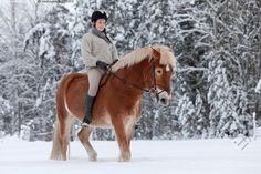 Ratsastusta talvella - 20-30 aikuinen eläin harrastus hevonen ihminen kaunis kavioeläin lumi luminen nainen nisäkäs nuori päivä ratsastaja ruskea suomalainen talvi talvinen ulkona vapaa-aika villapusero ratsastaja kaunis Equus caballus suomenhevonen hevosharrastus ratsastus Palomino, Horse Girl, Horse Breeds, Beautiful Creatures, Finland, Equestrian, Training, Horses, Sport