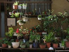 Tokyo Plant Pots 160 東京植木鉢 by TsuyaTsuya Nemury, via Flickr Lots and lots of pots!