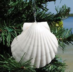 Scallop Shell Ornaments. I'm going to need some fine silver ribbon.