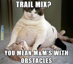 I personally love memes and funny cat memes are my personal favorite. Who could resist adorable images of cats, dogs, and other animals next to a funny tagline? Cat Memes To Make You Laugh Until You Cry! Funny Shit, Haha Funny, Funny Cute, Funny Stuff, Zumba Funny, Funny Things, 21 Things, Top Funny, Cat Stuff