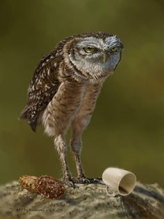 when he wanted to drink coffee with cookies. by on DeviantArt Funny Owl Pictures, Bird Pictures, Funny Owls, Cute Funny Animals, Owl Bird, Pet Birds, Owl Wallpaper Iphone, Burrowing Owl, Bird Barn