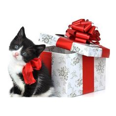 Black White Catty With Gift Box ❤ liked on Polyvore featuring animals, xmas and christmas