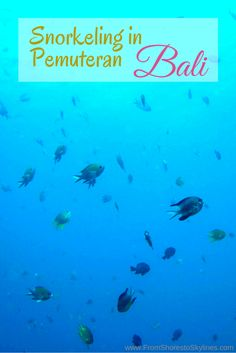Snorkeling in Pemuteran Bali, I've never seen so many fish!