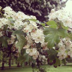 Flowers in Green Park, London