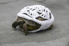 Googles billedresultat for http://poppygall.com/blog/wp-content/uploads/2011/06/poor-turtle.jpg