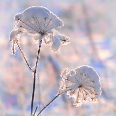 Winter flowers by Regina Šarkuvienė
