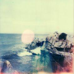 Pacific Grove, Monterey County, California // Celina Wyss