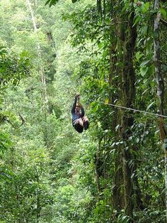 Zip Lining! I'm going to do this some day!