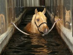 Just a lovely afternoon stroll in the Aqua-Tred machine at the rehab facility within Tom McCutcheon Reining Stables in Aubrey, TX Dream Stables, Dream Barn, Most Beautiful Animals, Beautiful Horses, Beautiful Things, Reining Horses, Free Horses, Horse Videos, Types Of Horses