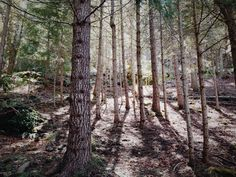 New free stock photo of nature forest trees #freebies #FreeStockPhotos
