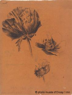 René Lalique Trois études de fleurs de pavot entre 1860 et 1945 fusain sur papier végétal H. 0.285 ; L. 0.218 musée d'Orsay, Paris, France
