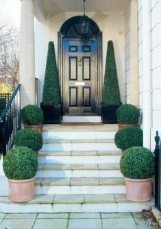 Creating kerb appeal (curb appeal) with large topiary trees and buxus balls in pots to line the steps creating a grand entrance at this beautiful London town house with classic black front door. Front Door Steps, Front Door Entrance, Front Entrances, Grand Entrance, Front Door Decor, Entrance Ideas, Door Ideas, Front Doors, Patio Steps