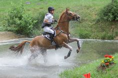 Stock Photo Location: FEI International Three Day Event Luhmühlen 2014, Lower Saxony, Germany Terms of Use: Free for uncommercial use as references and photomanips, free for print sales inside...
