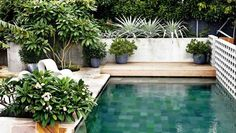 A swimming pool is one of the favorite places to refresh our mind. It is no wonder that people will seek the resort with modern and luxurious swimming pool to spend their vacation. A nice swimming pool design will require . Pool Plants, Potted Plants, Piscina Interior, Small Pool Design, Backyard Pool Landscaping, Terraced Backyard, Courtyard Pool, Concrete Pool, Small Pools