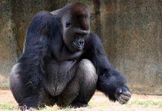 World of Primates @ Fort Worth Zoo