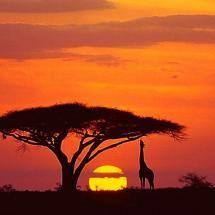 tanzania-sunset-photo-by-boyd-norton-giraffe-sunset-tanzania