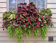Image result for Coleus Window Box Planter Ideas