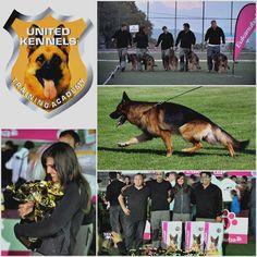 dog şampiyon