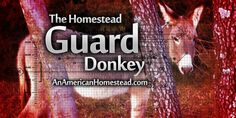 The Homestead Guard Donkey | An American Homestead - Living Off Grid in the Ozark Mountains