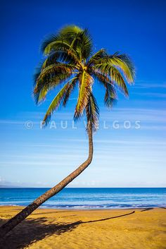 Photograph - Bent Curved Palm Tree Maui Hawaii Photo by Paul Velgos , Wall Art Prints, Fine Art Prints, Framed Prints, Beach Park, Hawaii Pictures, Canvas Home, Maui Hawaii, Hawaiian Islands, Large Canvas