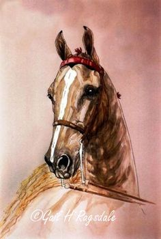 watercolor & India Ink of American Saddlebred Horse by Gail Ragsdale