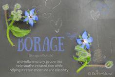 Organic Borage (Borago officinalis) ~ anti-inflammatory properties help sooth irritated skin while helping it retain moisture and elasticity.