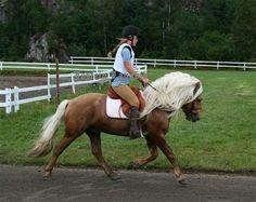Photos of your Nordland horse :-)