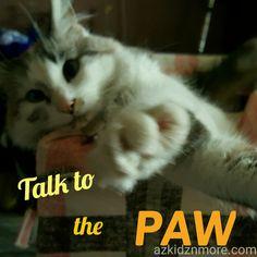 Talk to the PAW!  - Mayhem - #kittymayhem #cutestcat #cutestpicture #cutestkitty #furbabykitty #furbabycat # funnycat #cat