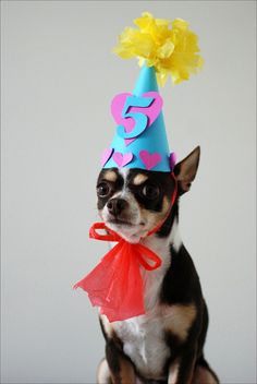 Pets at Birthdays