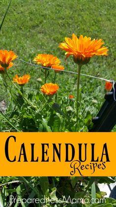 6 calendula herbal recipes for health and gifts | PreparednessMama