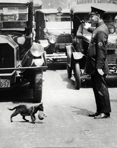 1925 cat crosses street with police protection. This is in New York City