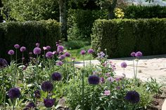 Annie Pearce | Life Enhancing Gardens and Landscapes