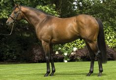 Rock Of Gibraltar (IRE) 1999 B.h. (Danehill (USA)-Offshore Bloom (IRE) by Be My Guest (USA) 1st 2000 Guineas (GB-G1), Irish 1000 Guineas (IRE-G1), Dwhurst S (GB-G1), Grand Criterium (FR-G1), Prix du Moulin (FR-G1), St. James's Palace S (GB-G1), Sussex S (GB-G1) Standing at Coolmore.